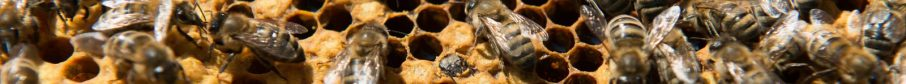 cropped-abeilles_a-19.jpg